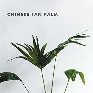 plants house plant guide gardening indoor plants green thumb succulents green chinese fan palm