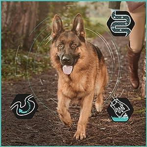 croquettes chien digestion sensible