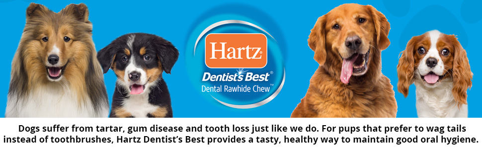 Dentists Best Banner