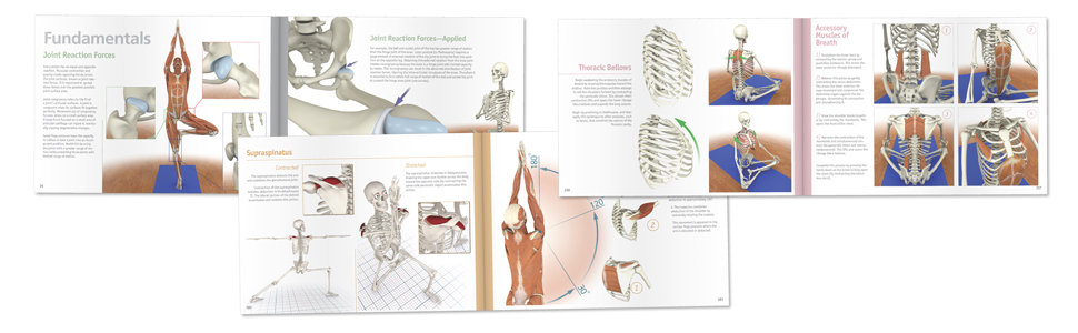 Amazon.com: The Key Muscles of Yoga: Scientific Keys, Volume ...