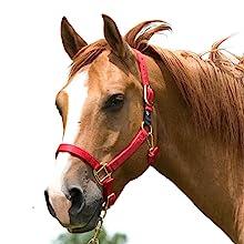 WEAVER PINK HORSE NYLON HEAT SEALED BUCKLE HALTER ADJUSTABLE SMALL HORSE U-4-DP