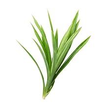 Kewda Leaf Extract