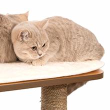 Cat on memory foam cushion