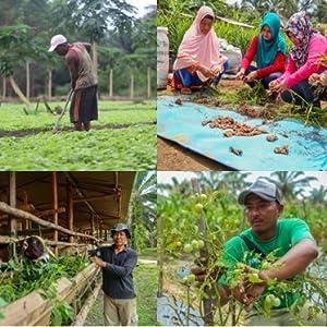 インドネシア、アグロフォレストリー、総合森林農業システム、IFFS