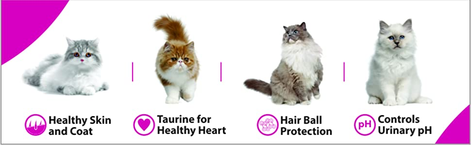 Cat , Cat Food , Pet Food , whiskas , Me-O, Maxi , Persian cat , persian , Fur