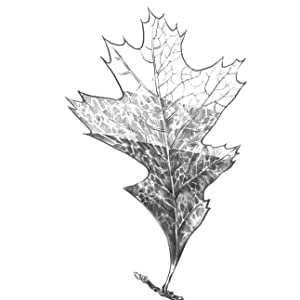 With a little bit of knowledge and training, you can easily draw a detailed motif such as this leaf.