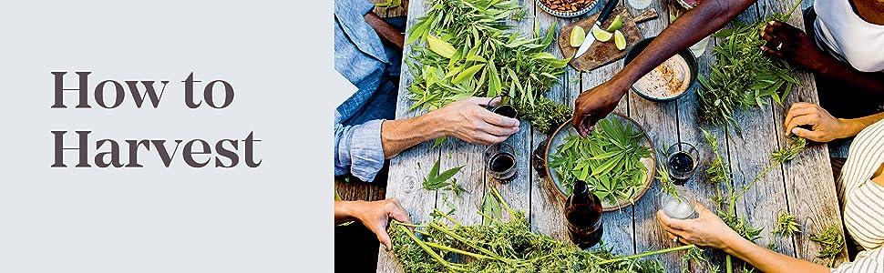 The Cannabis Gardener, Penny Barthel