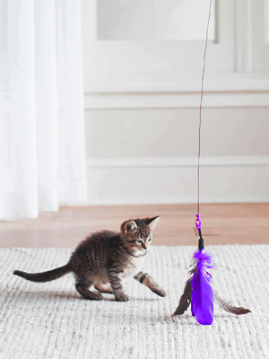air wand, my cat from hell, jackson galaxy cat products, wand maker, jackson galaxy wand,