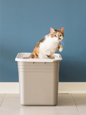 cat litter boxes with lids, digging box, top access litter box, cat box lid,