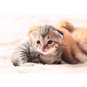Amazon Com Hartz Powdered Kitten Milk Replacer Formula 11oz Pet Supplies