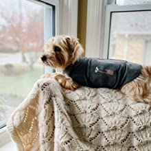 thundershirt can help with separation anxiety