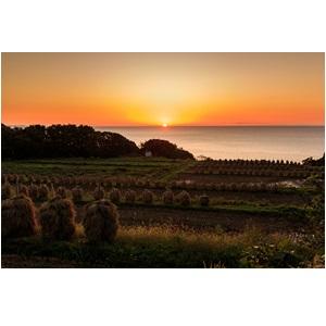 庄内地方の夕陽に生える田園