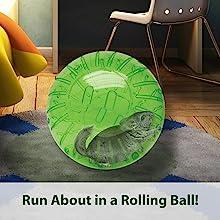 chinchilla in rolling ball