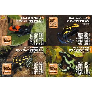 iZoo KawaZoo 白輪剛史 イズー カワズー 爬虫類 カエル トカゲ ワニガメ 外来種 池の水抜いてみました レプタイル