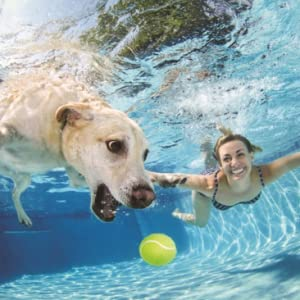 Dog and woman playing in a swimming pool