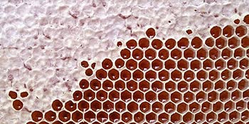 Desert Creek honey comb