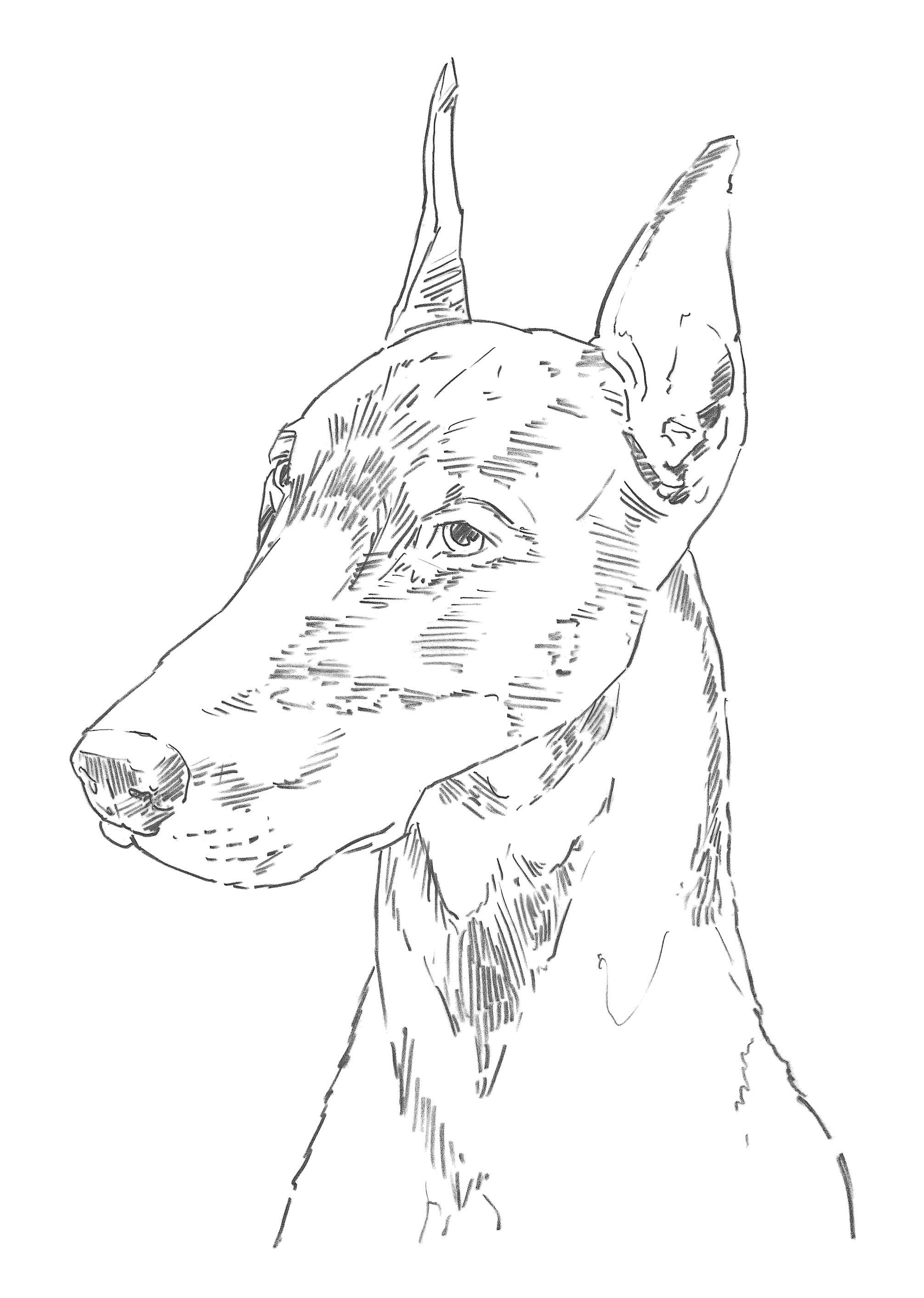Learn to Draw Dogs & Puppies: Step-by-step instructions ...