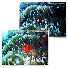 Fotos unter Wasser - Die besten Kameras!