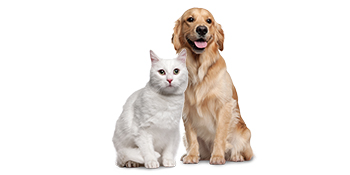 Geat for Cats & Dogs