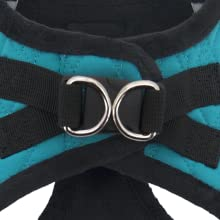 dog harness, puppy harness, harness, set up,