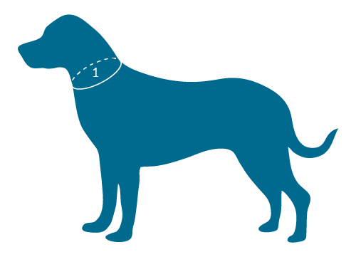 Led Dog Collar Amazon