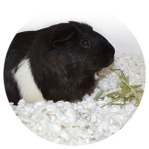 small pet bedding, nesting bedding, guinea pig, bedding, small animal bedding, small animal litter