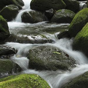 Waterfall Diet Pdf