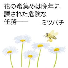 ミツバチ画像