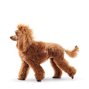 Biosilk For dogs, Shampoo, Conditioner, USA, Sulfate, Paraben Free, pH Balanced, Safe