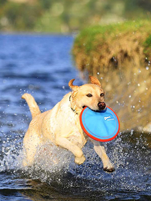dog frisbee soft, dog flying discs, soft frisbee for dogs, dog frisbee chuckit, hyper pet,