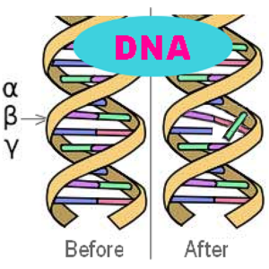 Damaged DNA by radaition GMC-500 Plus Geiger Counter