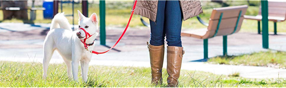 halti headcollar harness lead leash no pull