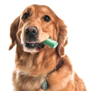 dog dental hygiene chew
