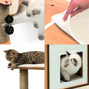Base w/ Cats