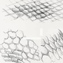 Skin,scales,dragon anatomy,texture,reptile,dinosauir,mythical creature,fantasy beast