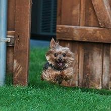 dog escape artist monitor locate find lost pet