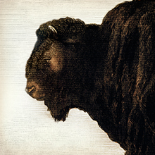 Bison illustration that shows how EPIC Bison meat bars are made from 100% grass fed bison.