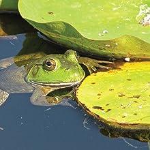 national wildlife federation, birds, butterflies, backyard wildlife, garden, gardening, yard