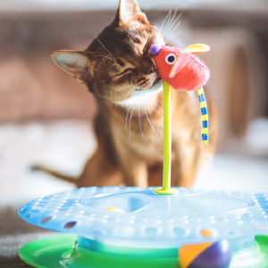 Cat playing with mouse on top of Petstages Cheese Chase interactive cat toy