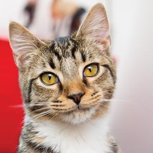 frolicat interactive laser cat toy for multiple cat households boredom destructiveness