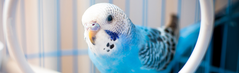 Relaxdays - Jaula para pájaros (147 cm, 10 L), Color Gris, Azul y ...