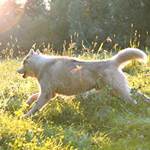 A dog happily running in a field in sunlight