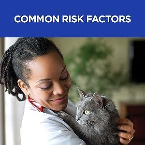 common renal kidney risk factors cats feline