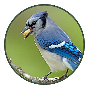 lyric, bird seed, bird food, wild bird seed, peanut pieces, peanuts for birds, peanuts, bird peanuts