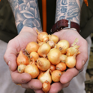 Onions, Leeks, and Garlic