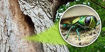 kills emerald ash borers