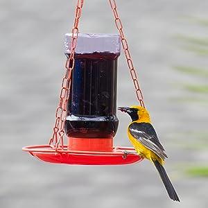 oriole feeder, jelly feeder, orange feeder, jelly jar feeder