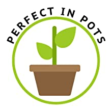 perfect in pots