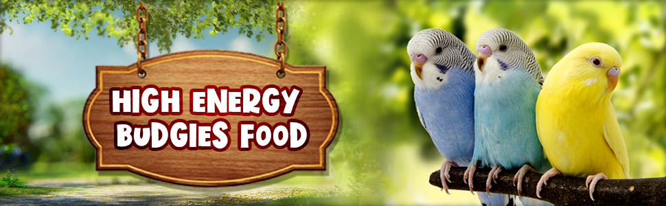 high energy budgies food