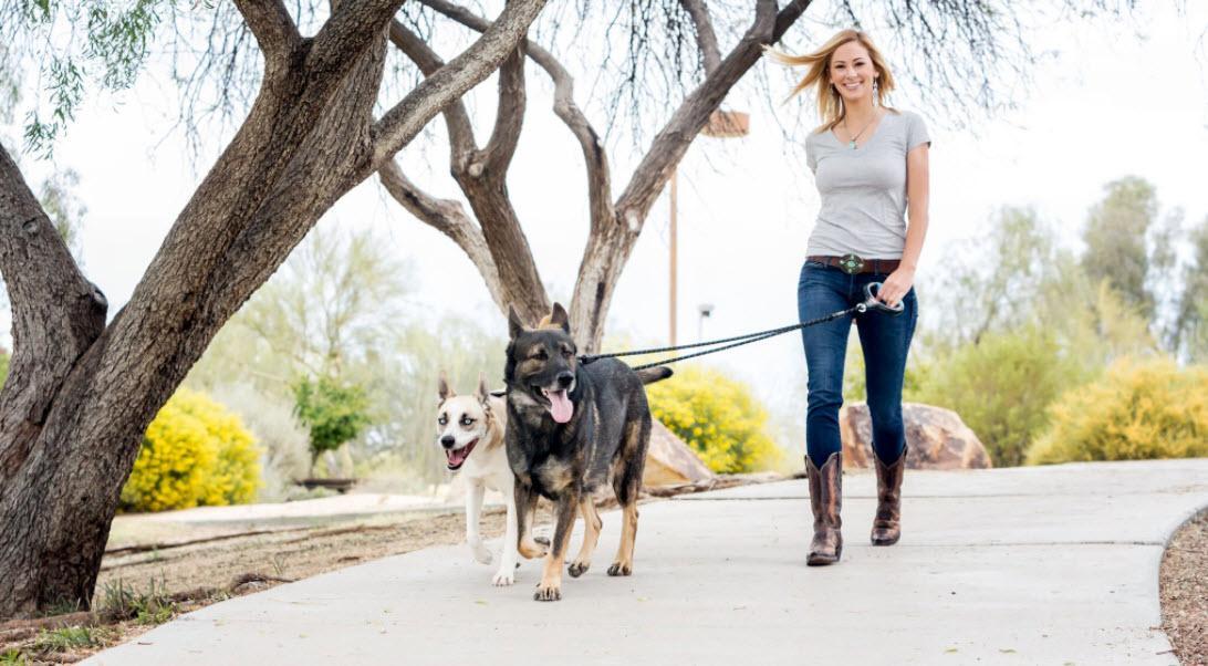 Amazon Com Wigzi Dual Dog Gel Leash Walks 2 Dogs
